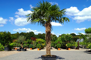 palmexpert-foto
