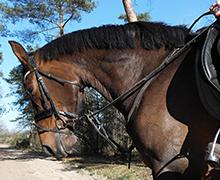 Paardrijden-Ommen-no-1