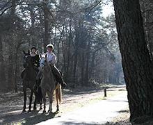 Paardrijden-Ommen-no-3