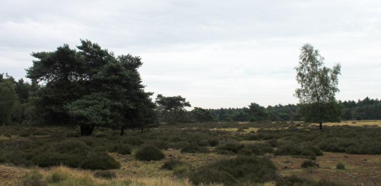 Informatieavond over plannen natuurbegraafplaats in Ommen