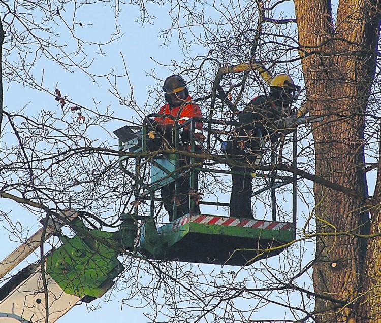 Buitendienst houdt bomen in vorm
