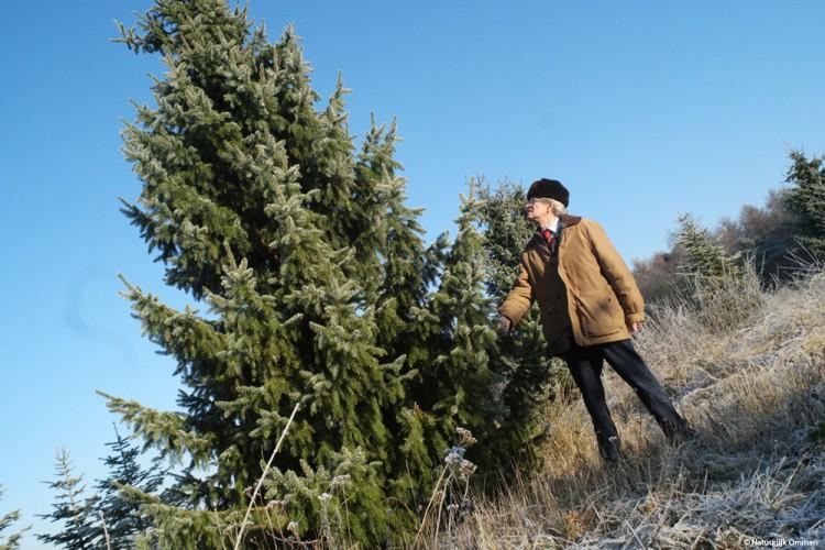 Kerstbomen in Ommen te kust en te keur