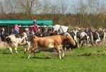 Dans van de koeien op zaterdag 22 april in Arriën