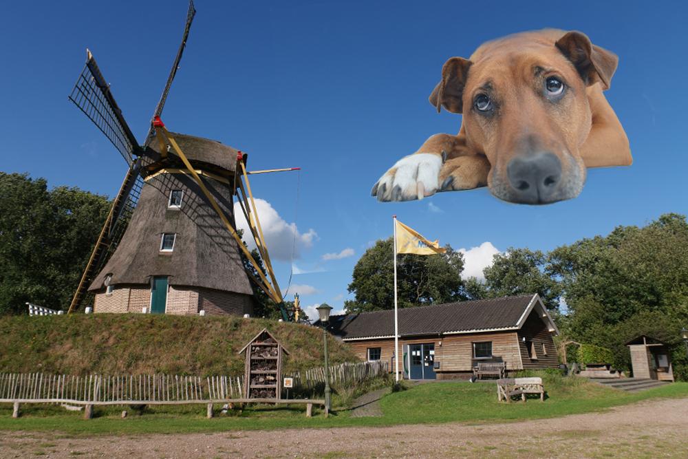 wandeldag-voor-hond-en-baas-ibr-no
