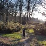 wandeling-nieuwjaarswandeling-2