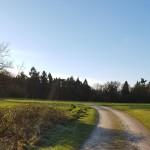 wandeling-nieuwjaarswandeling-3