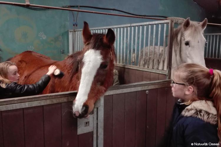 Paarden knuffelen en rommelmarkt in Dalmsholte